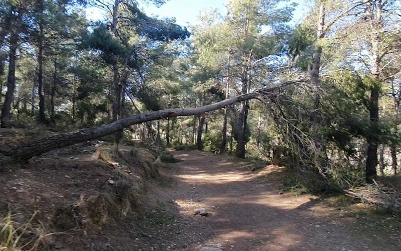 La Comunidad de Madrid anuncia un plan de limpieza y recuperación del arbolado en la Dehesa del Carrascal de Arganda tras los daños causados por Filomena
