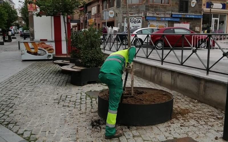 El Ayuntamiento de Arganda inicia la reposición de 452 ejemplares arbóreos afectados por la borrasca Filomena